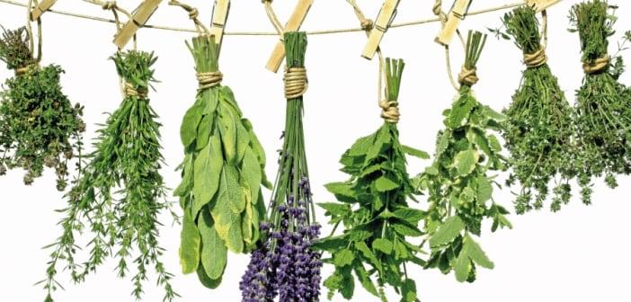 Lista de Ervas Aromáticas 1