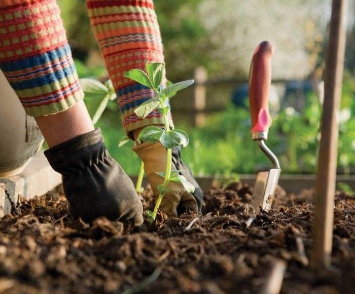 Cuide das suas plantas