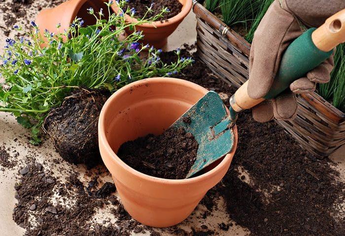 Como transplantar uma planta