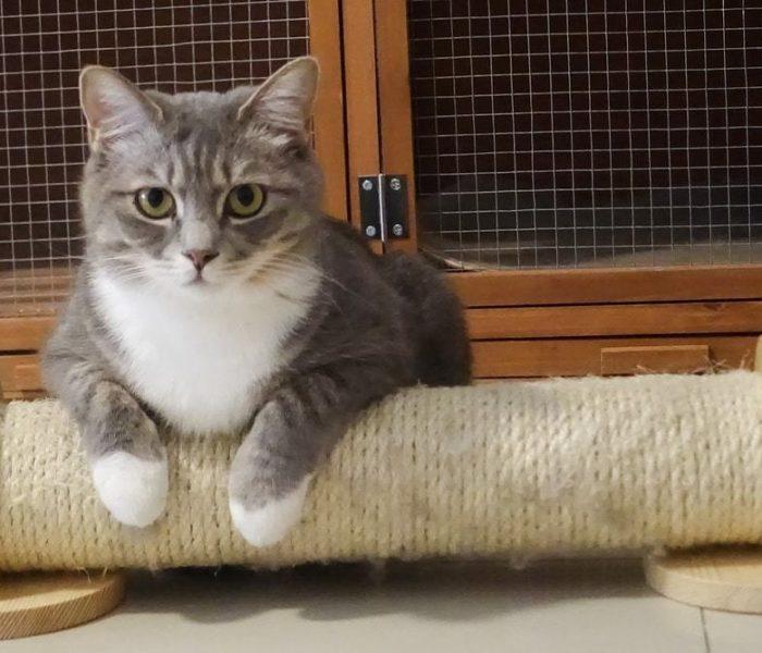 Sugestões de Hotéis para Gatos – vá de férias descansado