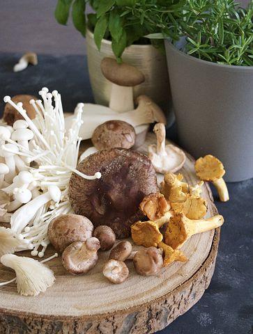 beneficios cogumelos