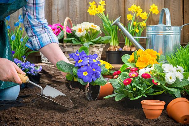 Cuide das suas plantas 2